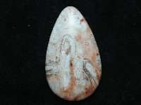 Palm Root Cabochon